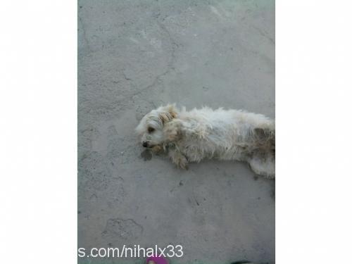 findik profile picture