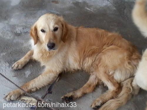 goldi profile picture
