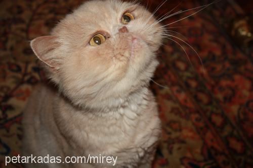 pasa profile picture