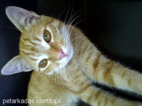 Çipil Profile Picture