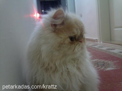 paşa profile picture
