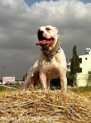araf profile picture
