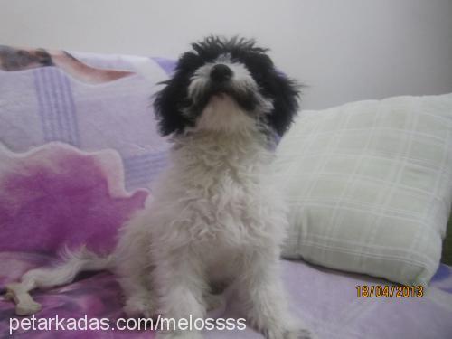 melo profile picture