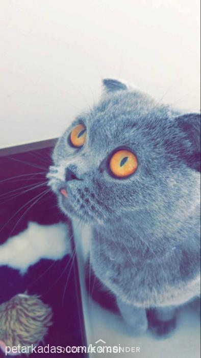 arya profile picture