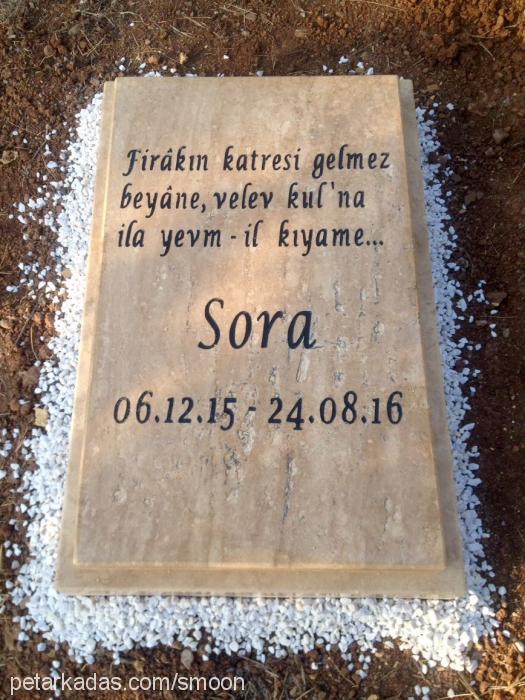 sora profile picture