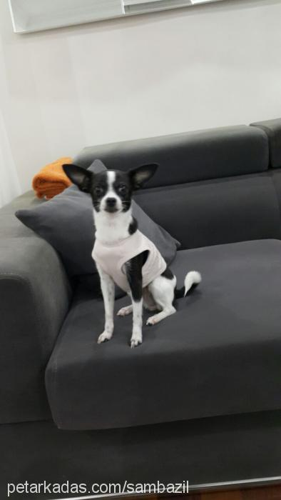 prenses profile picture
