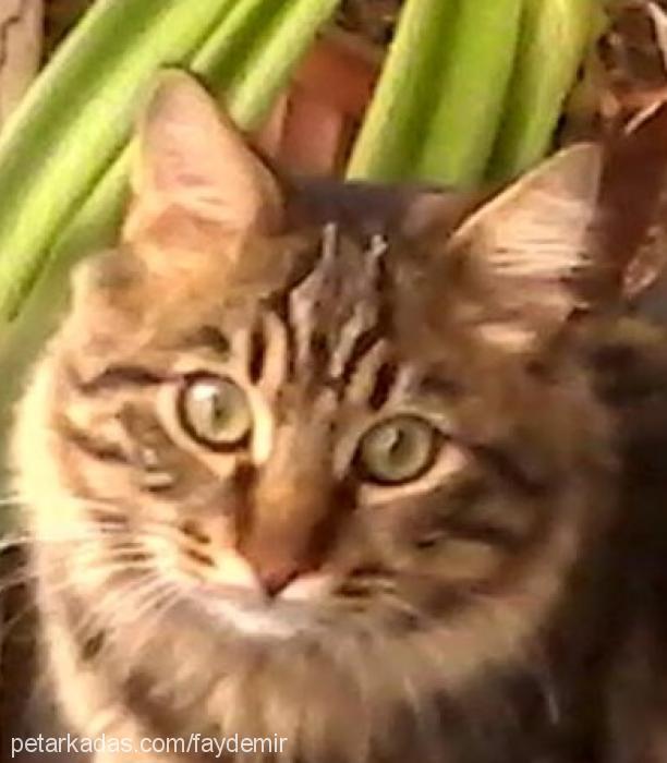 kimyon Profile Picture