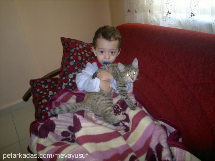emin karabulut Cover Image