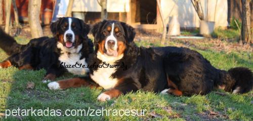zehra zehra Cover Image