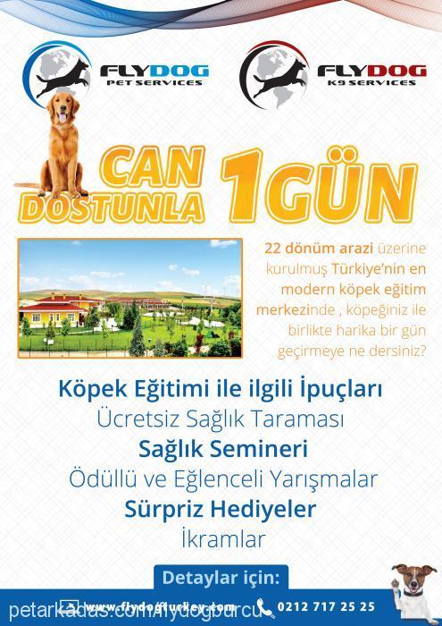 BURCU TÜRKOĞLU Cover Image