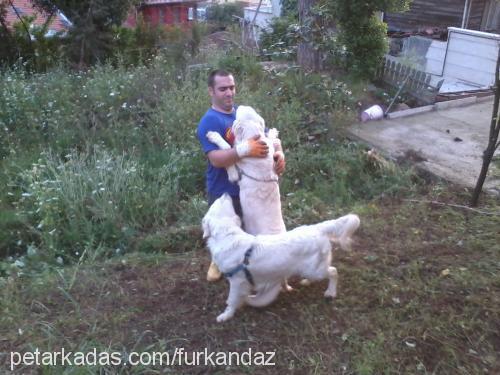 Furkan-Çiğdem KANDAZ Cover Image