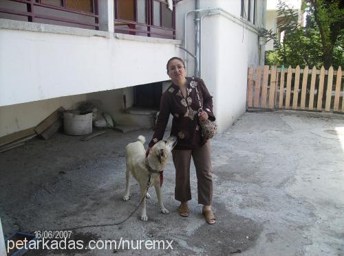 binnur erdem Profile Picture