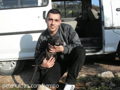 Kemal Dinçi Profile Picture