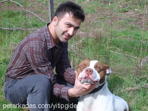ibrahim ALTINTAS Profile Picture