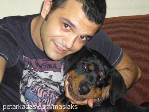 Doğan AKYILDIZ profile picture