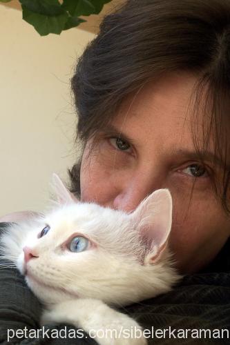 sibel erkaraman profile picture