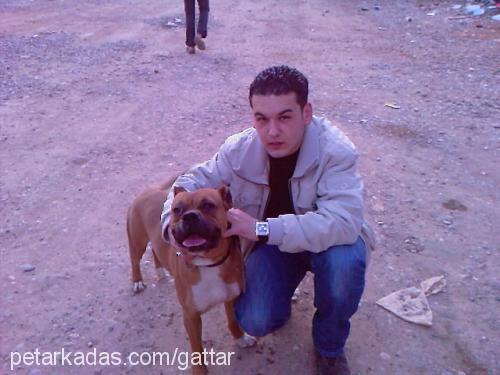 bayram akbaba Profile Picture