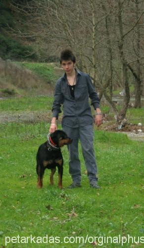 samet çetin Profile Picture