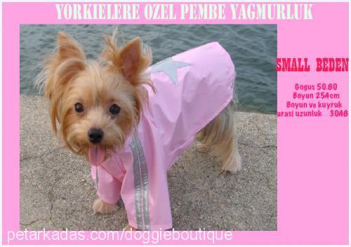 doggie boutique Profile Picture
