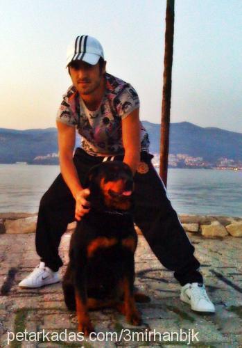 3mirhan-b3RkaY güler Profile Picture