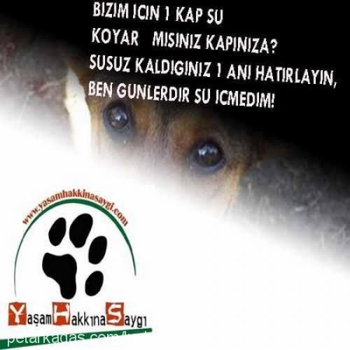 dilara avşar Profile Picture