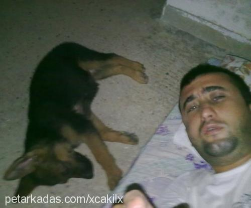 ozan ismail kara Profile Picture