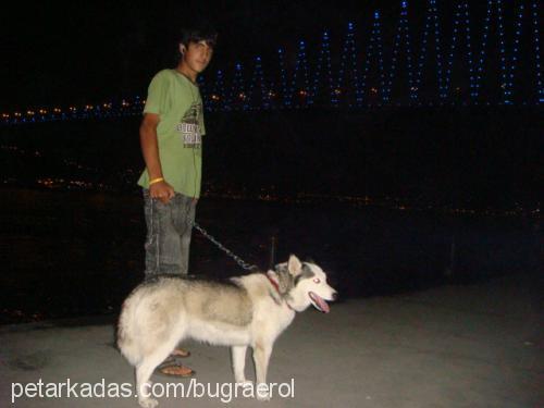 Buğra Erol Profile Picture