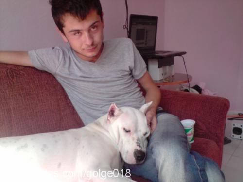 umut benlioglu Profile Picture