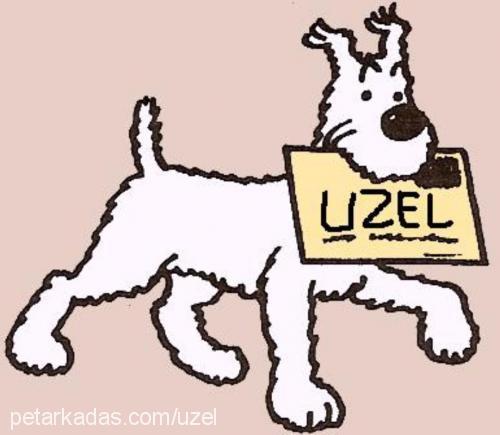 Uzel Uzel Profile Picture