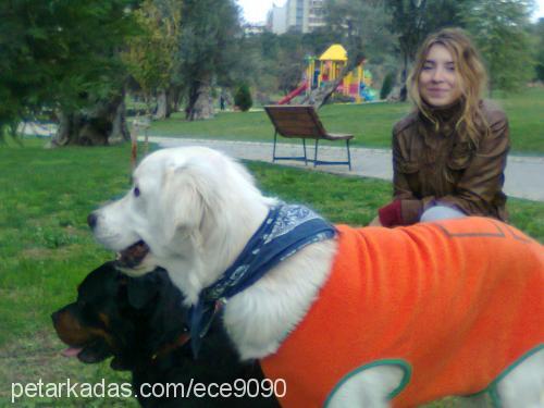 ECE KİRAZ Profile Picture