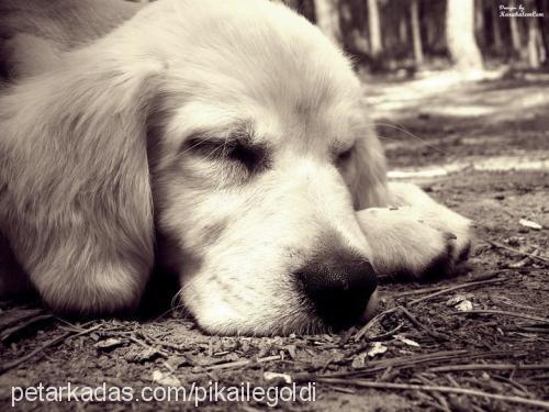 pika goldi Profile Picture