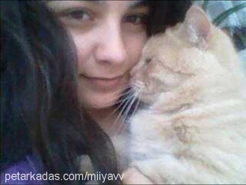 emine şafak Profile Picture