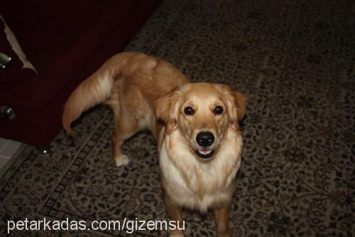 Gizem Uslu Profile Picture