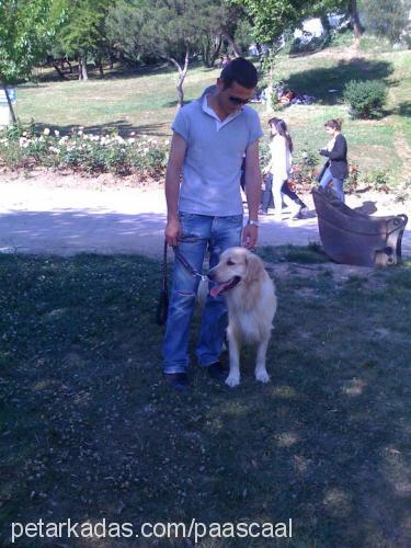 Ozan Ozan Profile Picture