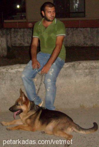 mehmet akgün Profile Picture