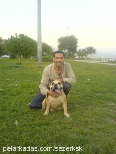 sezer yelbuğa Profile Picture
