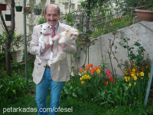 osman selçuk profile picture