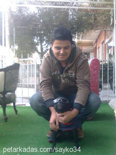 Şahin Yüzgen Profile Picture