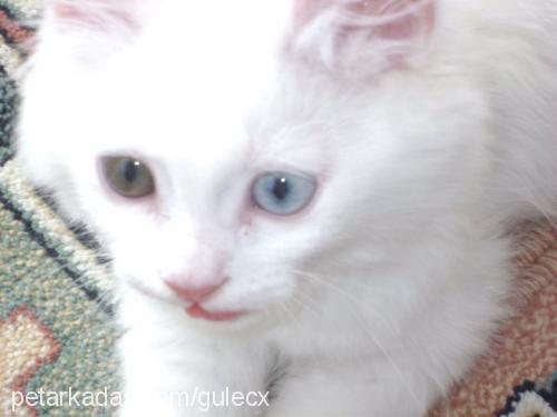 sümeyy güleç Profile Picture