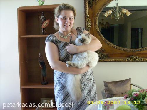 ahmet karaduz Profile Picture