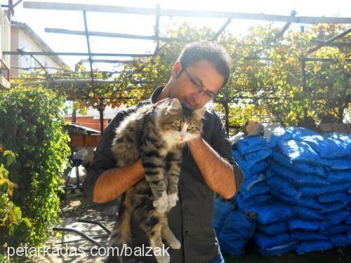 Sedat&Betül Sevinç Profile Picture