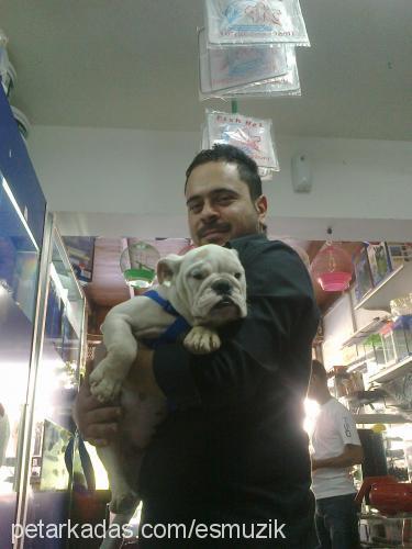 kadir petshop Profile Picture