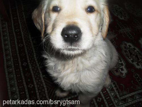 Büşra Bozkurt Profile Picture