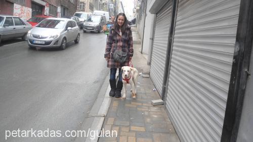 Pınar Cebeci Profile Picture