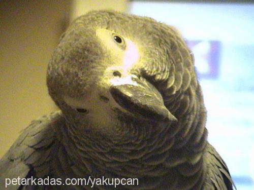 hakan yakupcan Profile Picture