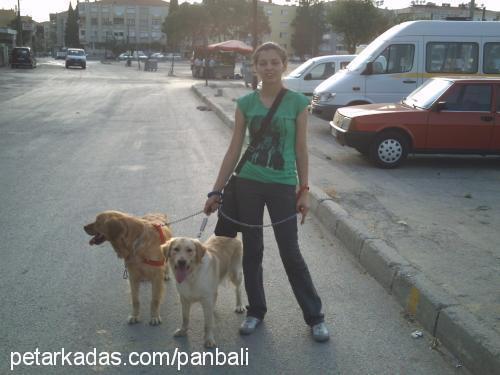 emine öztürk profile picture