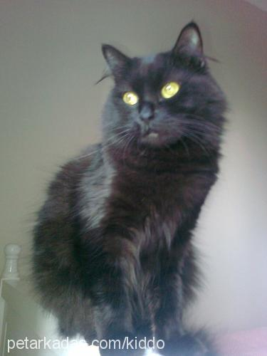 mervan-sezen aydın Profile Picture