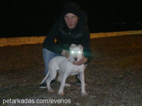 Mehmet Acar Profile Picture