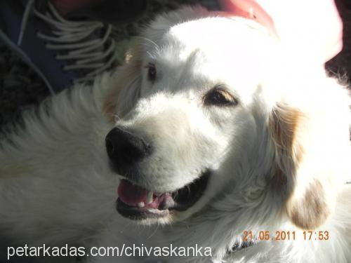 Emre Taş Profile Picture