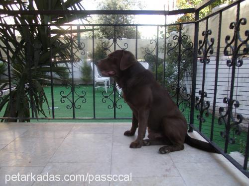 İlknur - muharrem-öykü Biçer Profile Picture